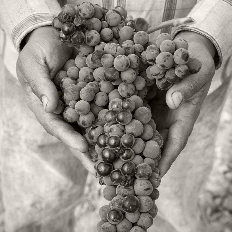 Grandeza grapes