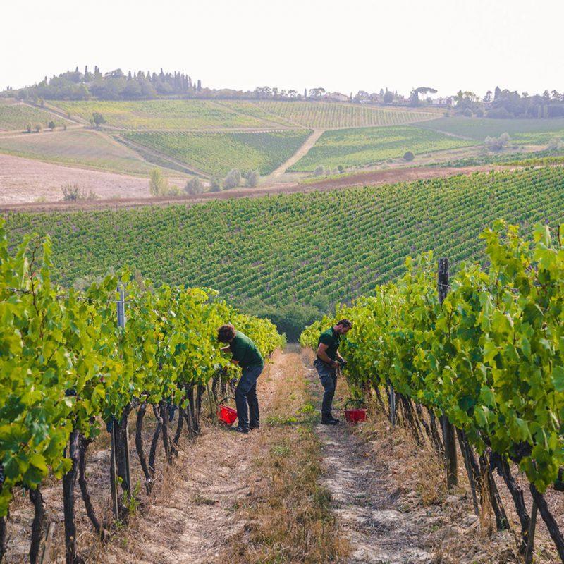 Off-Piste Wines brand image - vineyard
