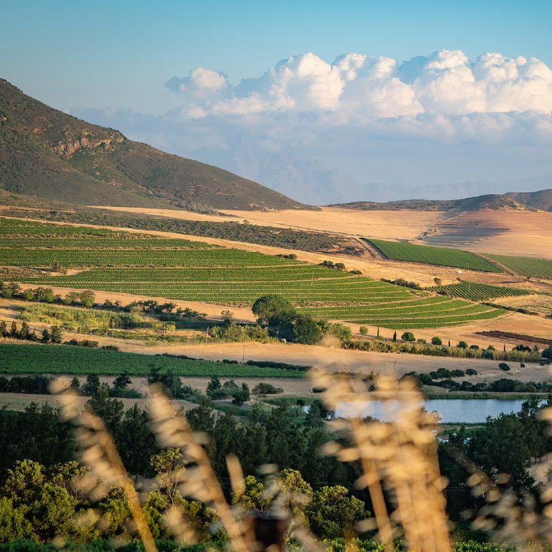 Off-Piste Wines brand imagery - landscape shot