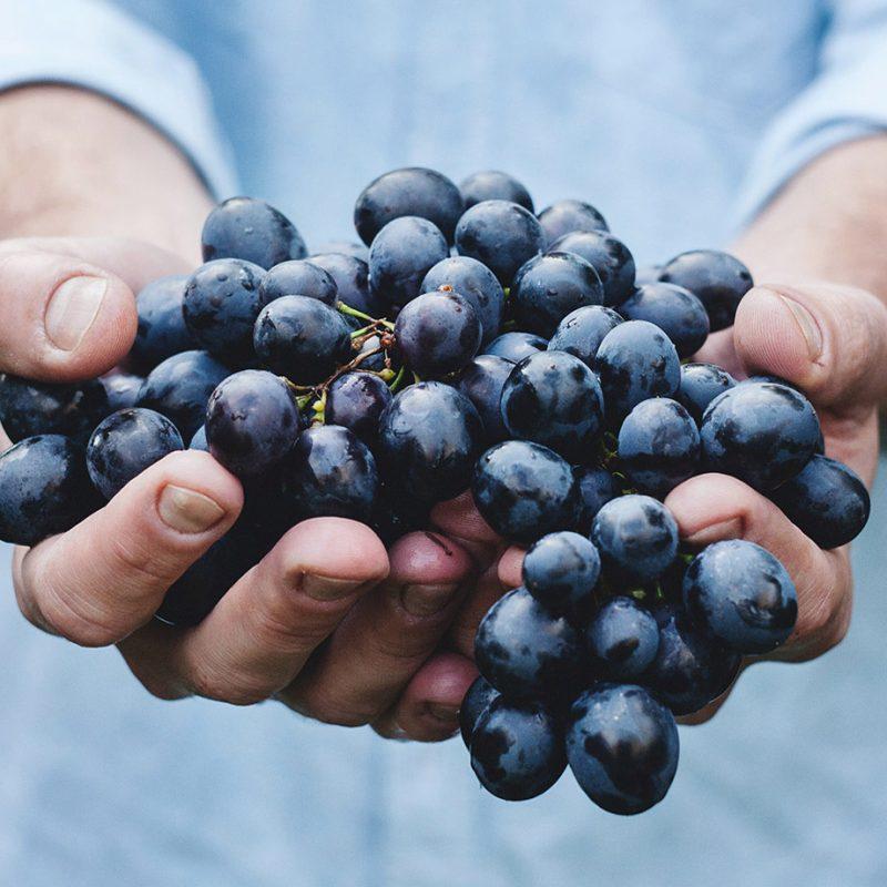 The Daring Duke grapes